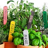 Evergreen Herbs