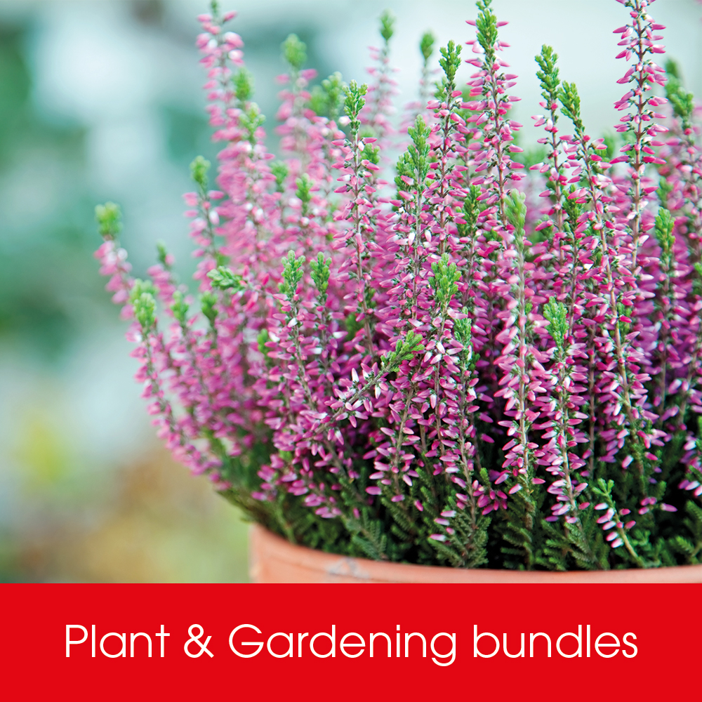 Shop Plant & Gardening Bundles